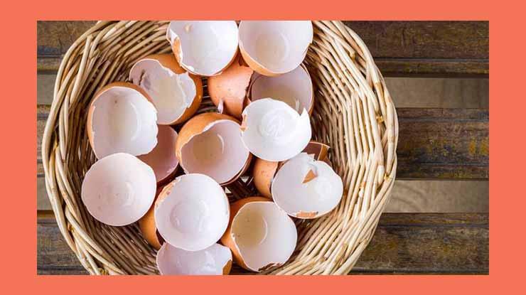Cangkang Telur