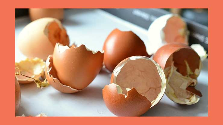 Cara Mengusir Tikus di Rumah dengan Cangkang Telur