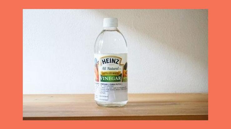 Cara Menghilangkan Semut di Rumah dengan Cuka Putih dan Air