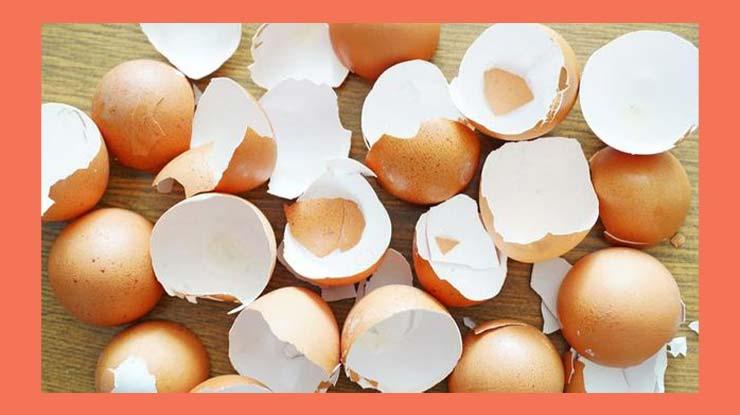 Cara Mengusir Tokek Menggunakan Cangkang Telur