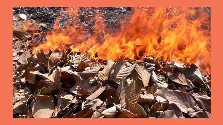 Membakar Daun Kering