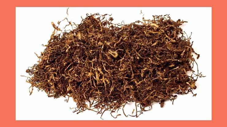 Cara Mengusir Tokek Menggunakan Tembakau